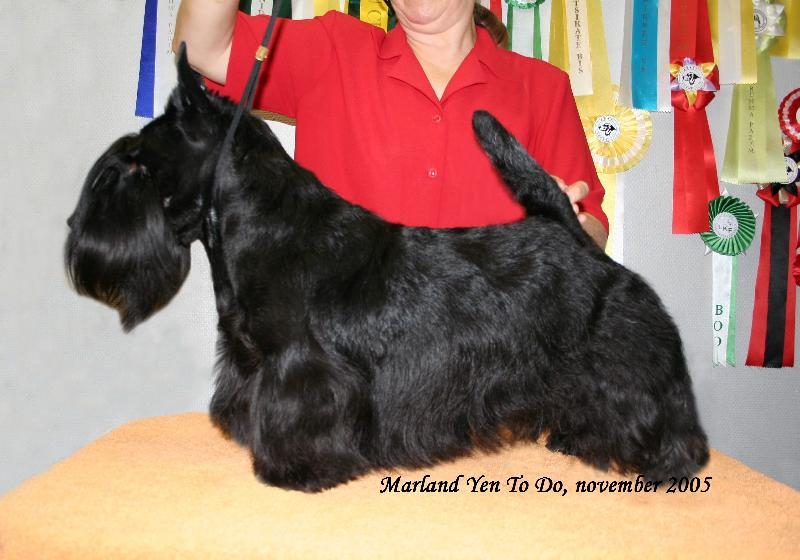 SCOTTISH TERRIER - Marland Yen to Do ID  2810 d633951e785
